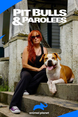 Pit Bulls and Parolees   Buy, Rent or Watch on FandangoNOW